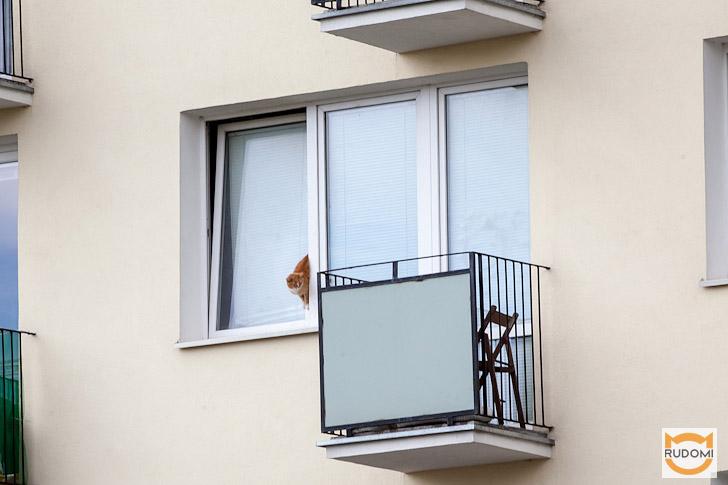 Koty i uchylne okna