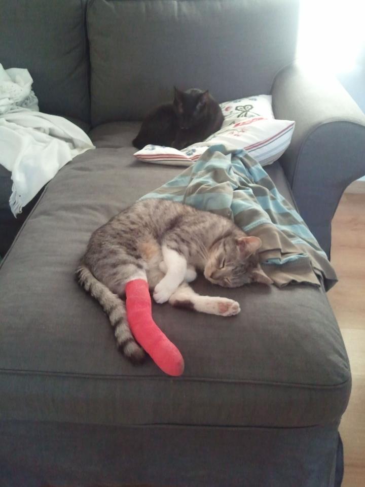 Jeden z kotów, którego historię właśnie poznaliście.