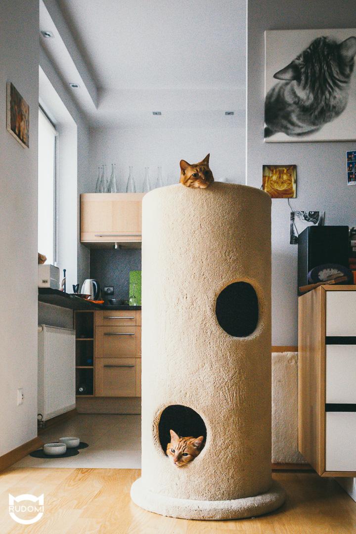 Kocia tuba