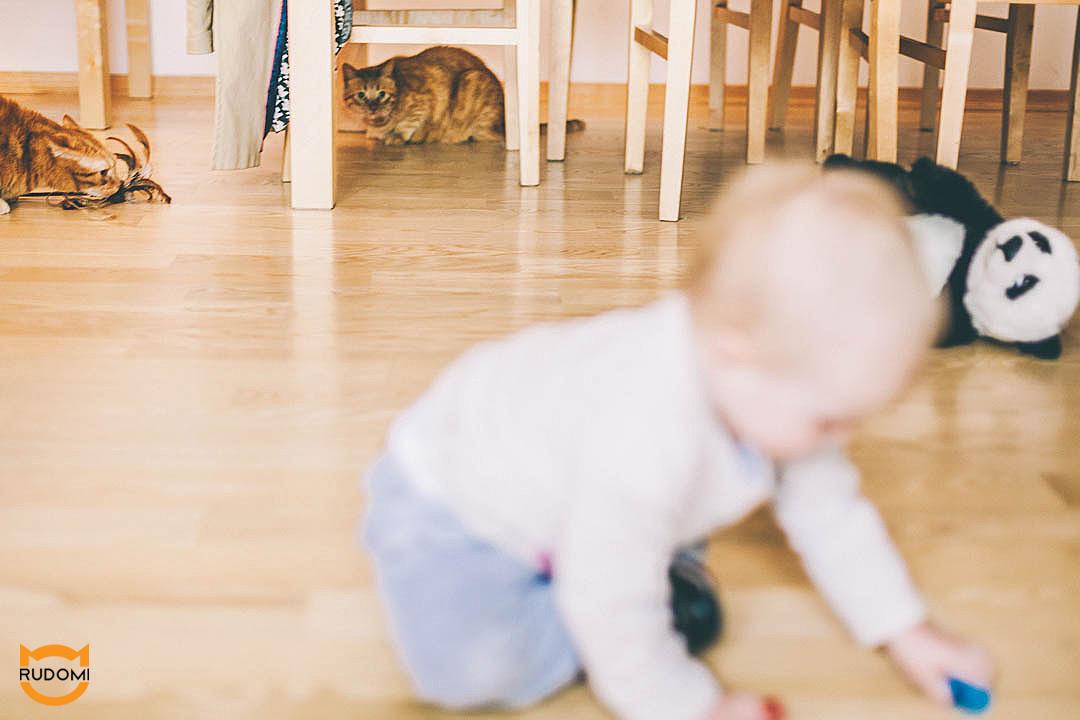 Ni pies, ni wydra czyli kot i dziecko