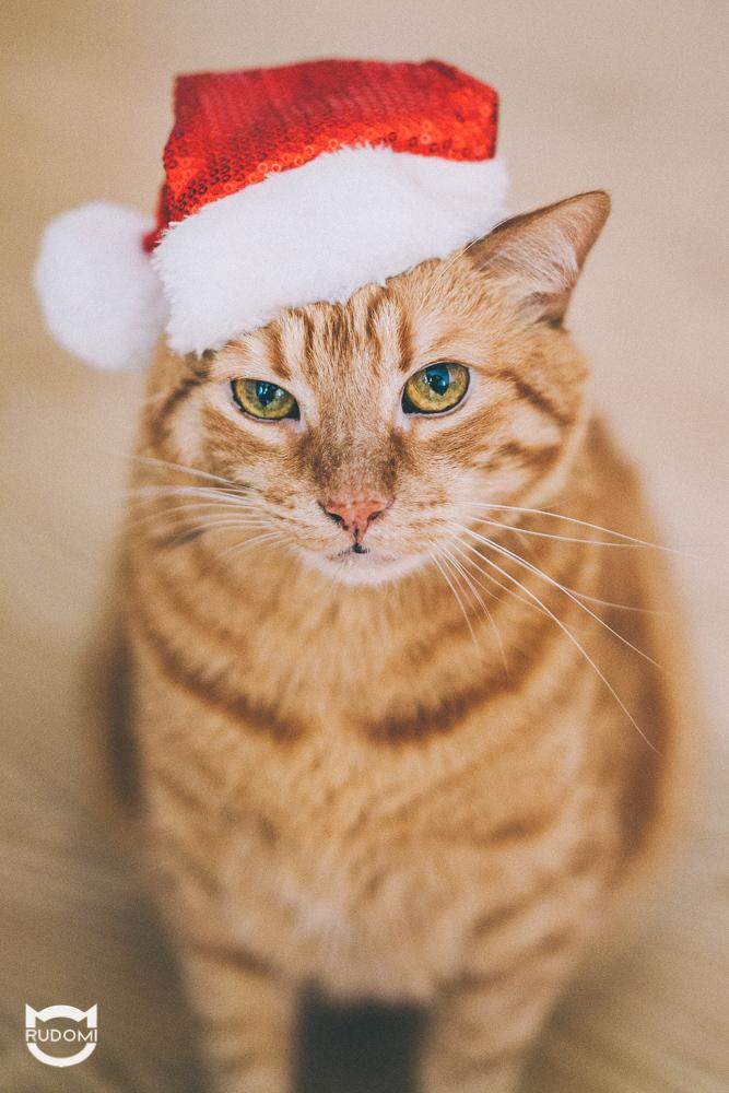 Rude zgodziły się w tym roku na kilka skromnych, świątecznych i bardzo CHWILOWYCH outfitów.