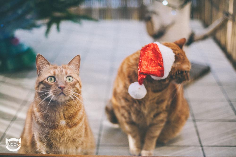 Świąteczna zaduma