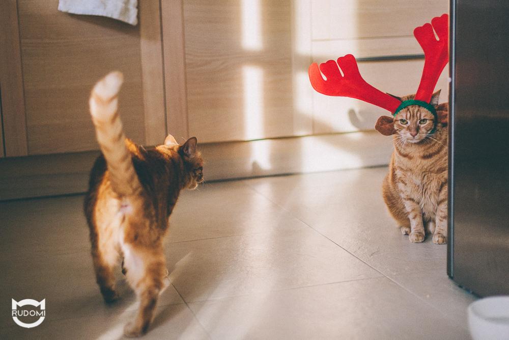 Jest wspólne oczekiwanie na świąteczny posiłek.