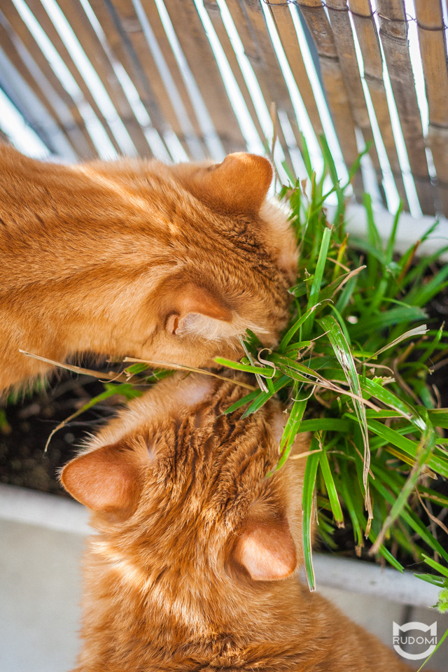 Trawa dla kota