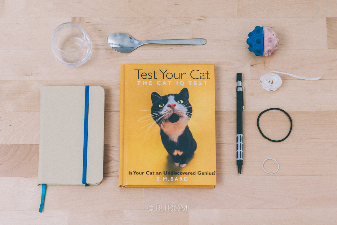 Test IQ dla kota
