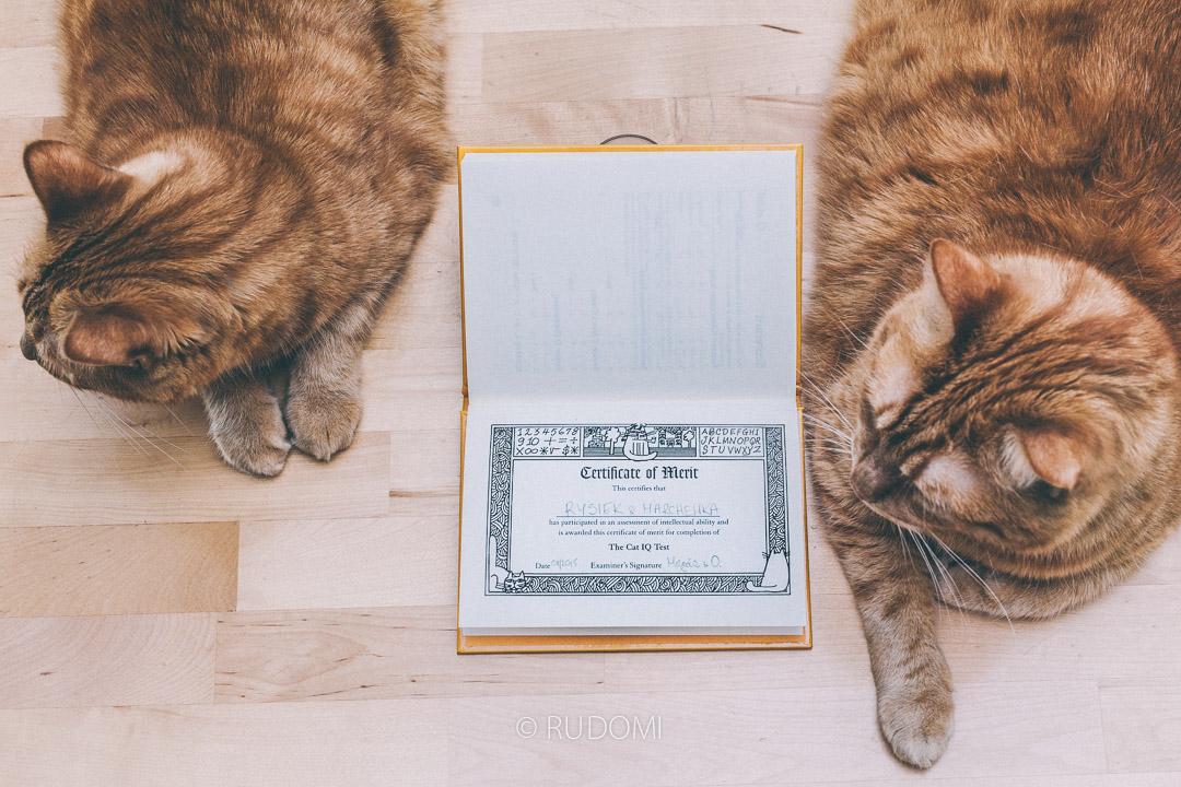 certyfikat kota