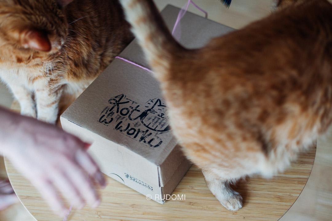 Koci box - Kot w worku - rudomi.pl