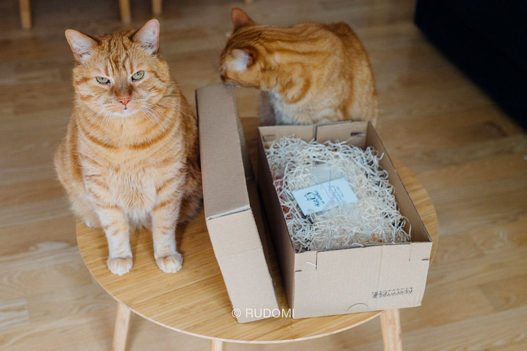 Ktoś chyba czeka na opróżnienie pudełka...