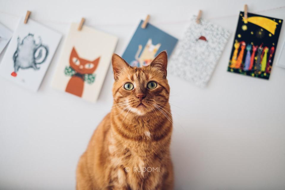 Kartki z kotami - kocie pocztówki - Rysiek i Marchewka - rudomi.pl