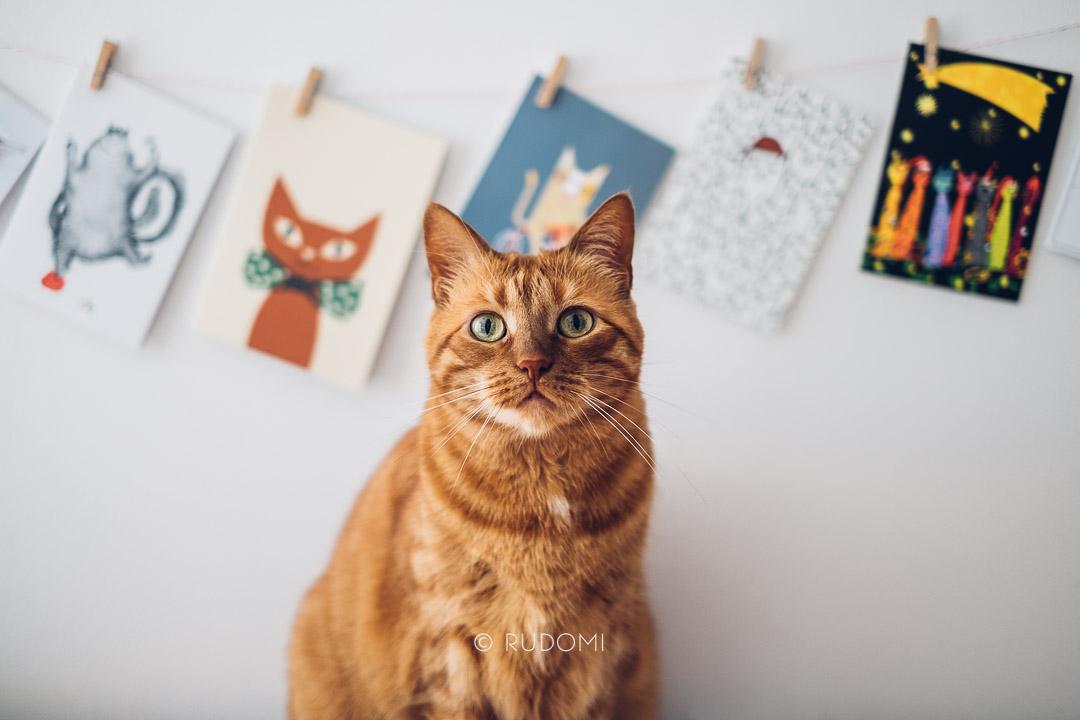 Kartki koty - pocztówki koty - Rysiek i Marchewka rudomi.pl