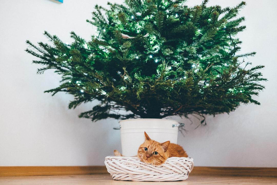 Święta i Sylwester z kotami, kot Marchewka w koszyku pod choinką - rudomi