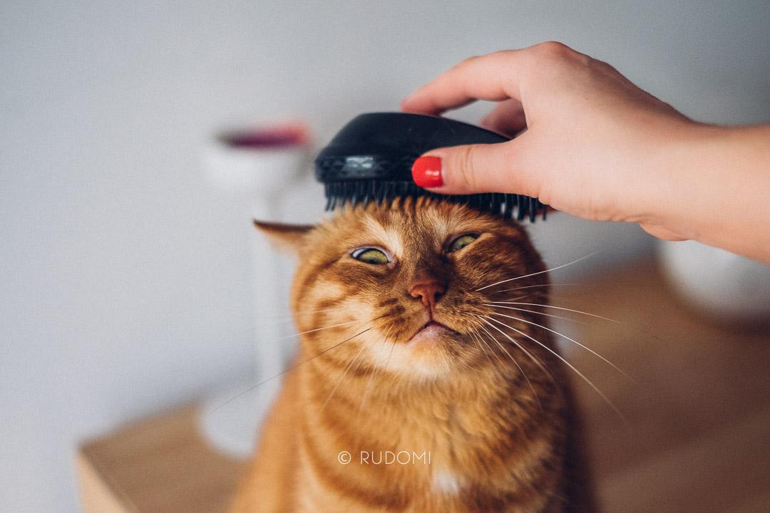 Kot czesany tangle teezer - rudomi