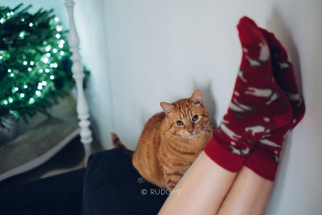 Rysiek, kocie skarpetki - rudomi