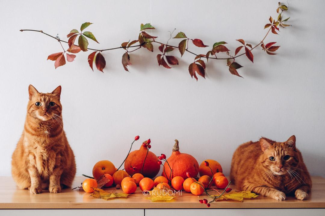 Halloween i koty
