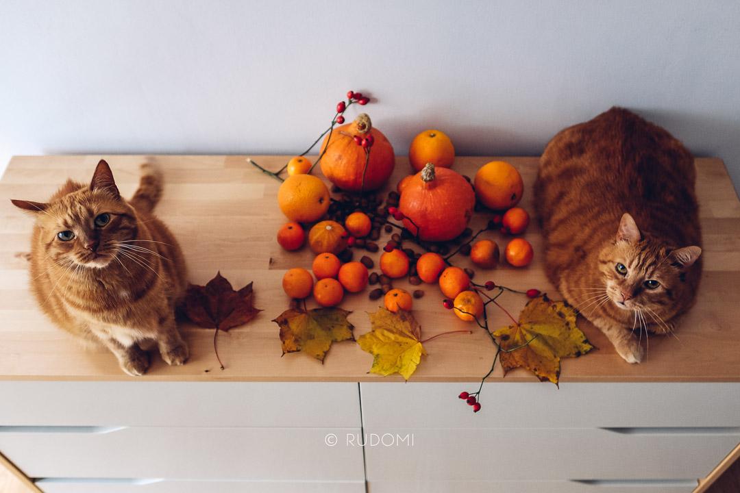 Rysiek i Marchewka dynie jesień