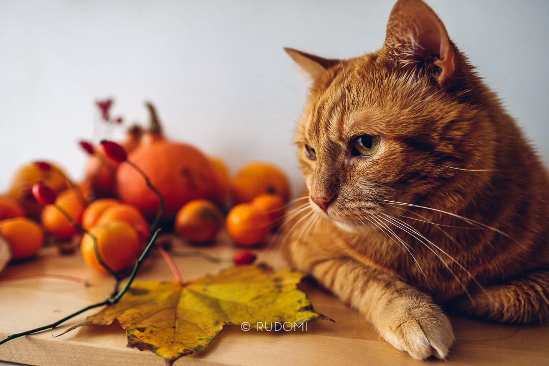 Halloween - rudomi