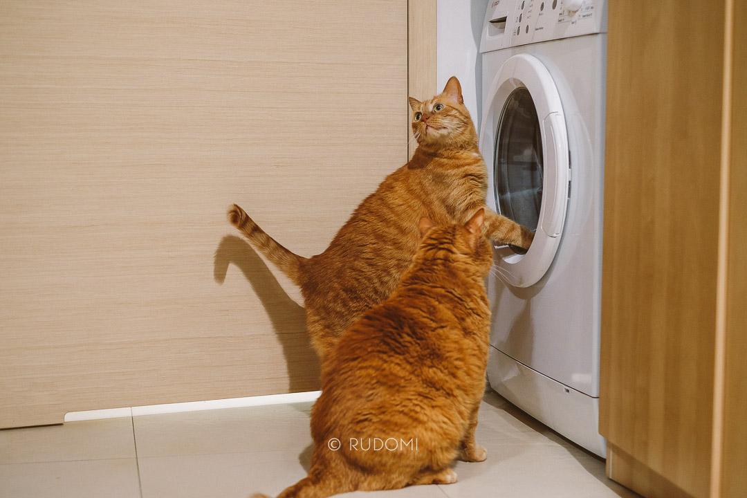 Koty i pralka