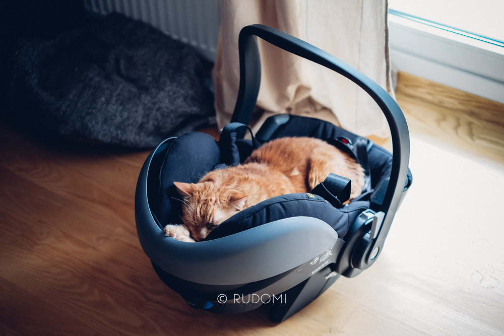 Jak Przygotować Koty Na Przyjście Dziecka Rudomi Koci